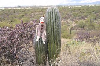 Sock on Cactus
